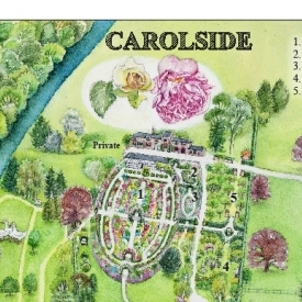 watercolour-map-of-carolside-gardens-595x843-colour-edited
